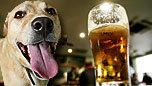 犬とビール.jpg
