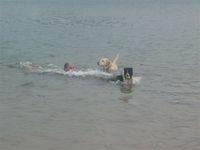 dog's beach.JPG